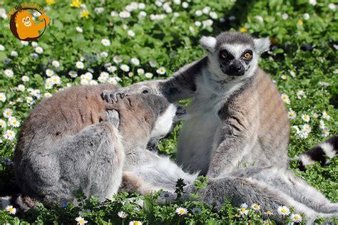 Zoo de Santillana del Mar. Planes para niños en Santillana ...