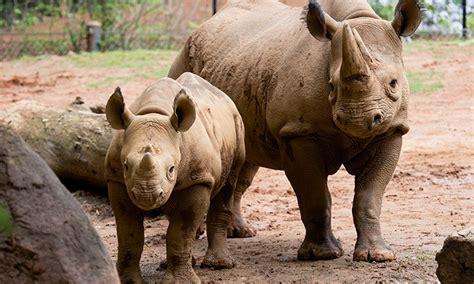 Zoo Visit for Two - Zoo Atlanta | Groupon