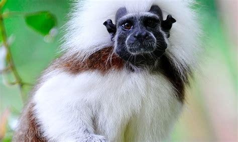 Zoo Visit - Rainforest Adventures Zoo | Groupon