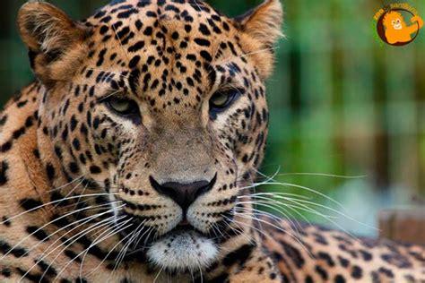 Zoo y Parque Cuaternario de Santillana del Mar   Entrada ...