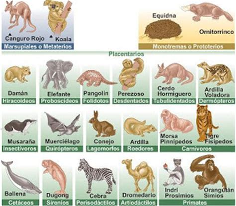ZOOLOGIA: DIVISIONES DE LA ZOOLOGIA