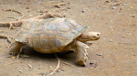 Zoológico de Mayagüez: Información de Zoológico de ...