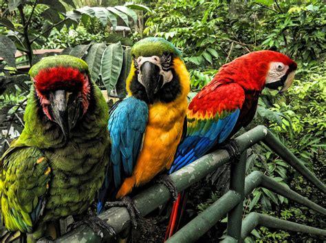 Zoológico de Mayagüez ~ Native parrots at the Mayagüez Zoo ...