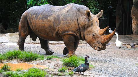 Zoológico de Mayagüez se defiende de las críticas | Mi ...
