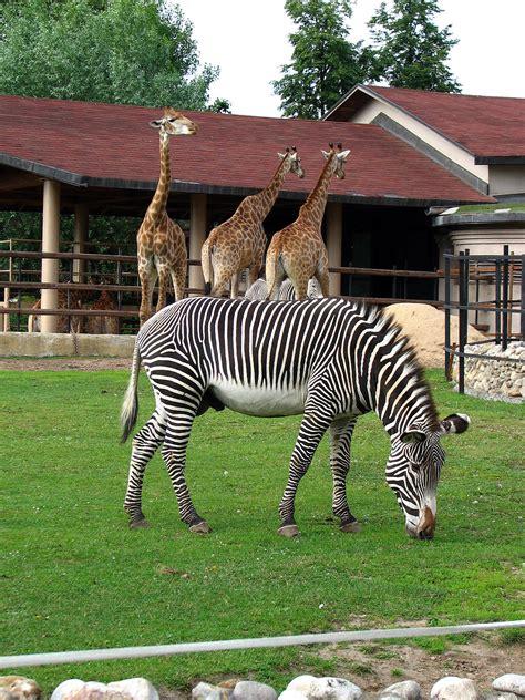 Zoológico de Moscú   Wikipedia, la enciclopedia libre