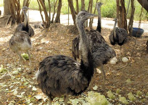 Zoológico El Pantanal | Bienvenidos a Guayaquil. Sitio web ...
