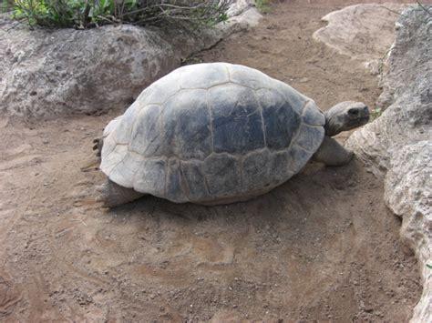 Zoológico, museo y acuario de las Bermudas   Wikipedia, la ...