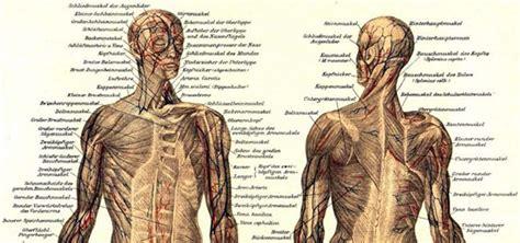 ZygoteBody: Anatomía básica online gratis